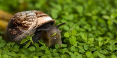 The secret life of slugs and snails