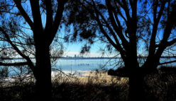 Protecting Perth's sunken forests